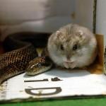 Ungewöhnliche Männer WG Hamster und Schlange
