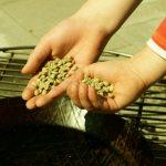 Start - die grünen Bohnen