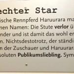 Haruurara – ein echter Star?